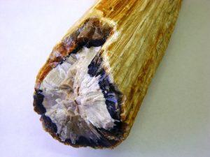 Madera Opalizada